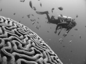 Scuba-diving brain shape